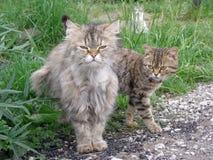 Кот с котенком, Стоковые Изображения
