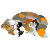 Кот с котятами на белой предпосылке Стоковые Изображения RF