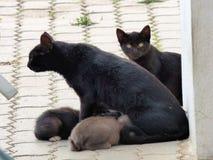 Кот с котятами Стоковая Фотография