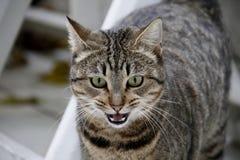 Кот с красить тигра и зеленые глазами стоковое фото
