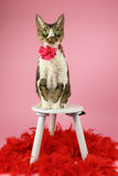 Кот с красными пер Стоковые Фотографии RF