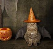 Кот с крылами в шляпе ведьмы стоковые фотографии rf