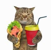 Кот с мягкими waffles и кофе стоковая фотография rf