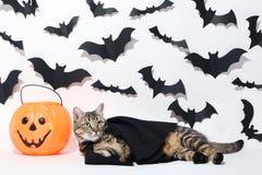Кот с пластичной тыквой стоковое фото