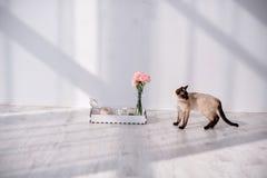 Кот с подносом завтрака Стоковые Фото