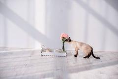 Кот с подносом завтрака Стоковая Фотография RF