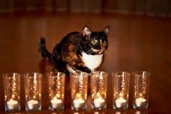 Кот с половинной черной стороной, красным цветом, сидит и вытаращится на горящих свечах yin yang Стоковые Фотографии RF