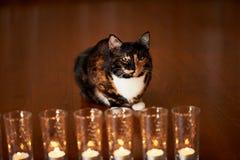 Кот с половинной черной стороной, красным цветом, сидит и вытаращится на горящих свечах yin yang Стоковое фото RF