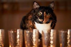 Кот с половинной черной стороной, красным цветом, сидит и вытаращится на горящих свечах yin yang Стоковое Изображение