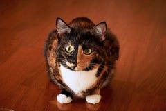 Кот с половинной черной стороной, красным цветом, сидит и вытаращится на горящих свечах yin yang Стоковые Фото