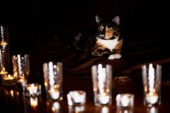 Кот с половинной черной стороной, красным цветом, сидит и вытаращится на горящих свечах yin yang Стоковые Изображения