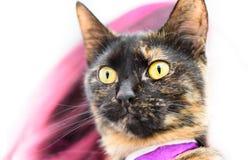 Кот с пурпурным воротником удивленный на что идет дальше стоковое фото