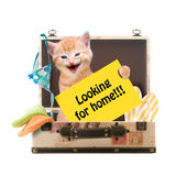 Кот с плакатом Стоковое Изображение