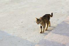 Кот с рыбой в его рте Стоковые Изображения RF