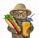 Кот с хот-догом и соком стоковые фото