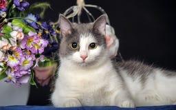 Кот с цветками Стоковые Фото