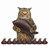 Кот с шоколадом 1 стоковые изображения