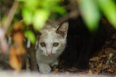 Кот тайника Стоковое фото RF