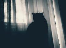 Кот, темнота, окно, смотря, атмосфера Стоковые Фотографии RF