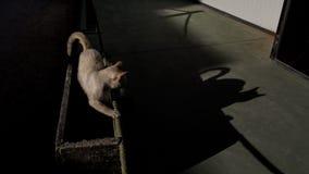 Кот тени Стоковое Изображение RF
