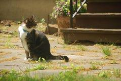 Кот тигра в весеннем времени стоковое изображение