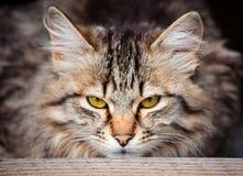 Кот тигра Стоковое Изображение