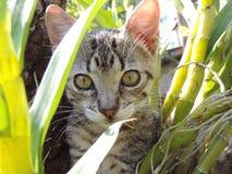 Кот Тома Стоковая Фотография RF