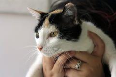 Кот Тома Стоковое Изображение