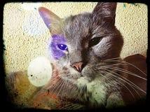 Кот Томми Стоковое Изображение RF