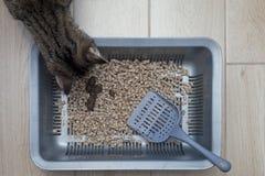 Кот туалета Стоковое Фото