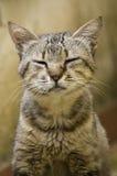 кот тупоумный Стоковые Фотографии RF