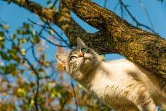 Кот увидел птицу, за которой я взбирался дерево стоковое изображение