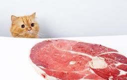 кот удачливейший Стоковое фото RF