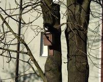 Кот улицы охотился птица, Россия стоковые изображения rf