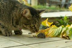Кот уловил мышь в саде стоковые фото