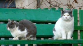 Кот улицы 2 сидя на стенде в холоде снаружи видеоматериал
