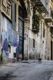 Кот улицы стоковое фото rf