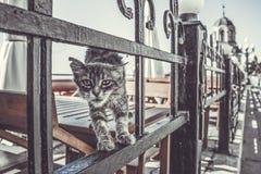 Кот улицы Стоковое Фото