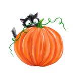 Кот хеллоуина черный с тыквой Стоковая Фотография