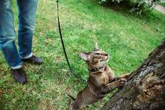 Кот хочет взобраться дерево стоковые фото