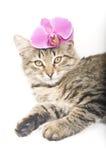 кот цветет пинк Стоковое Изображение