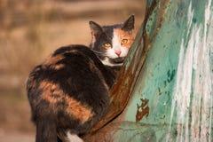 Кот 3 цветов дикий сидит на мусорном контейнере погани и смотрит камеру Стоковые Фото