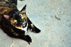 Кот 3 цветов Стоковая Фотография
