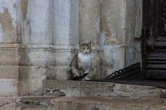 Кот церков Стоковые Фото