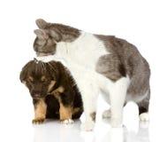 Кот целует щенка. Стоковое Изображение RF