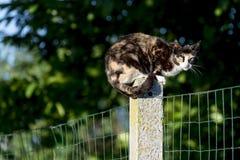 кот Черепах-раковины женский смотря камеру садился на насест между 2 Стоковое Фото