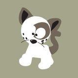 кот чистый Стоковое Фото
