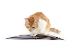 Кот читая книгу на белой предпосылке стоковое изображение rf