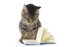 Кот читая тетрадь стоковая фотография rf