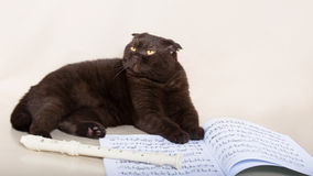 Кот шоколада Стоковые Фотографии RF